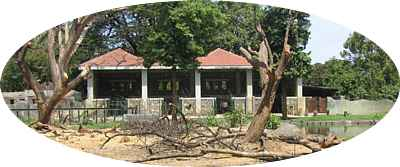 Trees cut in elephant enclosure in May 2006